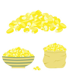 yellow corn seed vector image vector image