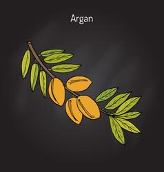 Argan argania spinosa vector