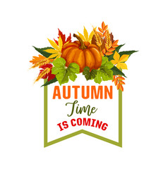 autumn time maple leaf or pumpkin poster vector image