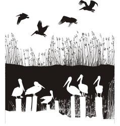 Flock of pelicans vector