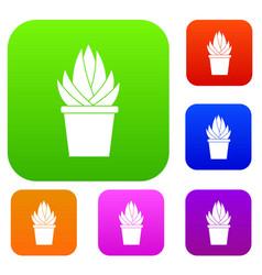 Aloe vera plant set color collection vector