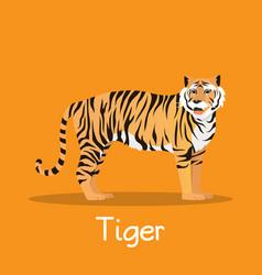 Fierce tiger in asia desian on orange vector