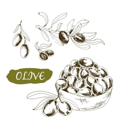 Olive Set of vector image
