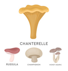 champignon honey agarics russula chanterelle vector image