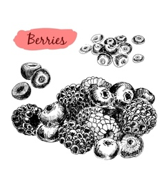Berries set of vector