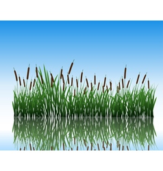 Water grass and flower vector