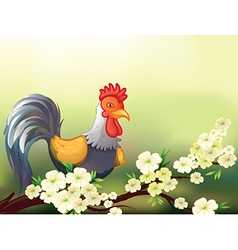 A chicken in a cherry blossom tree vector image