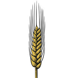 Wheat vintage engraved vector