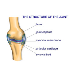Structure ofthe joint vector