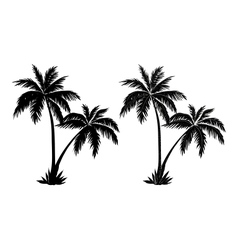 Palm trees black silhouettes vector image