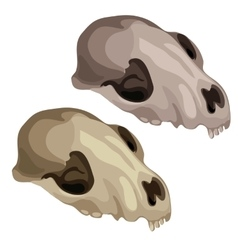 Ancient skull of a prehistoric animal vector