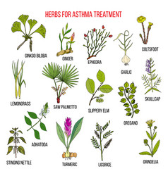 Natural herbs collection for asthma treatment vector