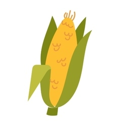 Corn cobs vector image