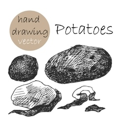 Hand drawn potatoes monochrome sketch vector