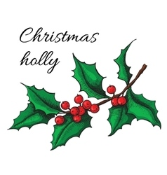 Hand drawn holly christmas mistletoe plant vector