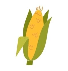 Corn cobs vector