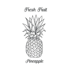 Hand drawn pineapple icon vector image