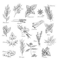 Herbs and spices sketch icons vector