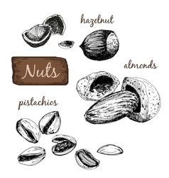 Nuts Set of vector image vector image