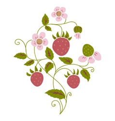wild strawberry vector image