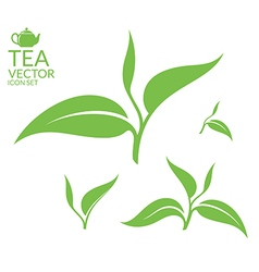 Tea isolated leaves on white background vector