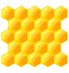Honeycomb isolated on the white vector