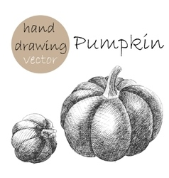 Hand drawn pumpkin monochrome sketch vector