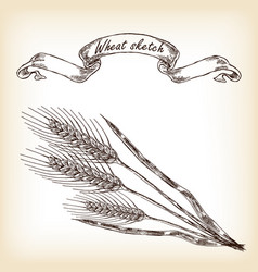 hand drawn wheat vector image vector image