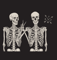 human skeletons best friends posing isolated vector image vector image