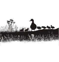 Meadow to ducks vector