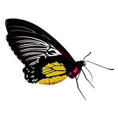 Color butterfly vector