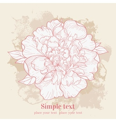 background with single peony Hand drawn vector image