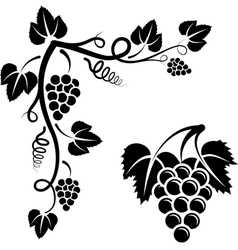 bunch of vine vector image vector image