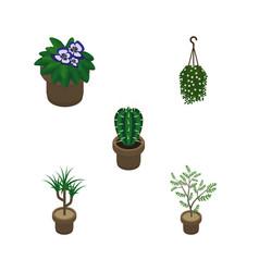Isometric plant set of fern houseplant peyote vector