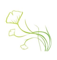 Biloba Plant vector image