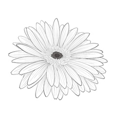 Beautiful monochrome black and white gerbera flowe vector