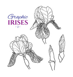 graphic of irises different angles vector image