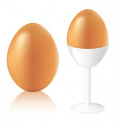 vector eggs vector image vector image