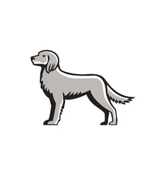 English setter standing side view retro vector