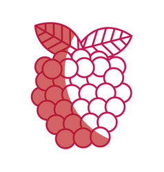 Blackberry fresh fruit icon vector