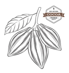 Cocoa pods label vector