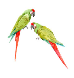 Watercolor green parrots vector