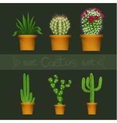 Different cactus types in flower pot realistic vector image vector image