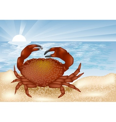 Crab at sea vector