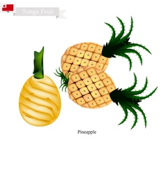 Fresh pineapple a famous fruit in tonga vector