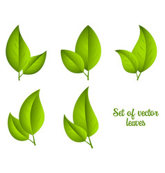 Set of green leaves vector