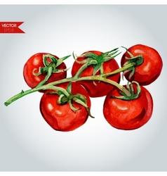 Tomato branch vector
