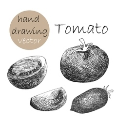 Hand drawn tomatoes monochrome sketch vector