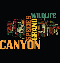 Grand canyon wildlife text background word cloud vector