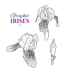 Graphic of irises vector